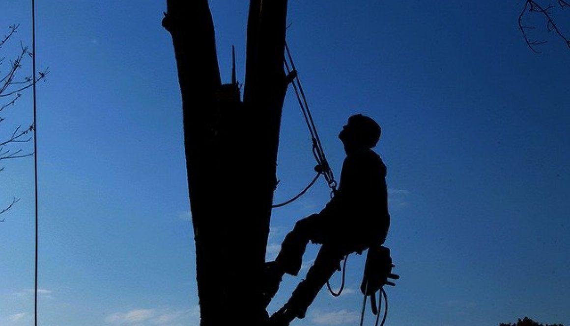 tree-service-1059484_640